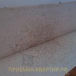 Приёмка квартиры в ЖК Синема: плесень под ламинатом