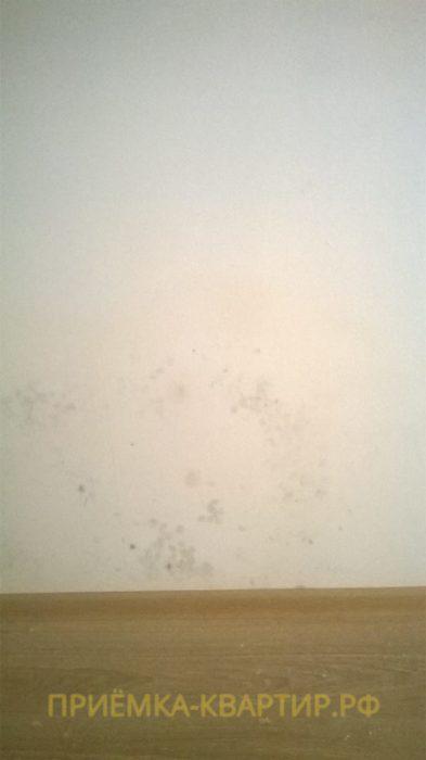 Приёмка квартиры в ЖК Весна 3: Плесень на стене в комнате