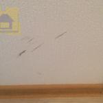 Приёмка квартиры в ЖК Новое Янино: Полосы на обоях, пузыри в углах под обоями